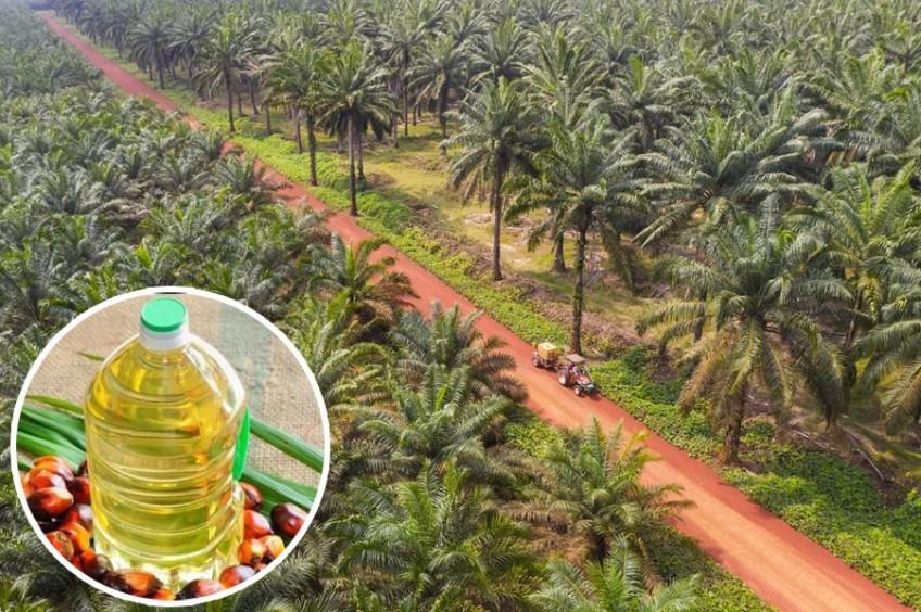 पाम आयल आयातमा भारतको प्रतिबन्ध, नेपालको निर्यात व्यापार धरासायी